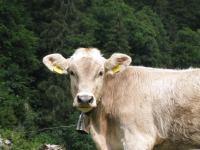 Moo 2 (Swiss O Week, Switzerland)