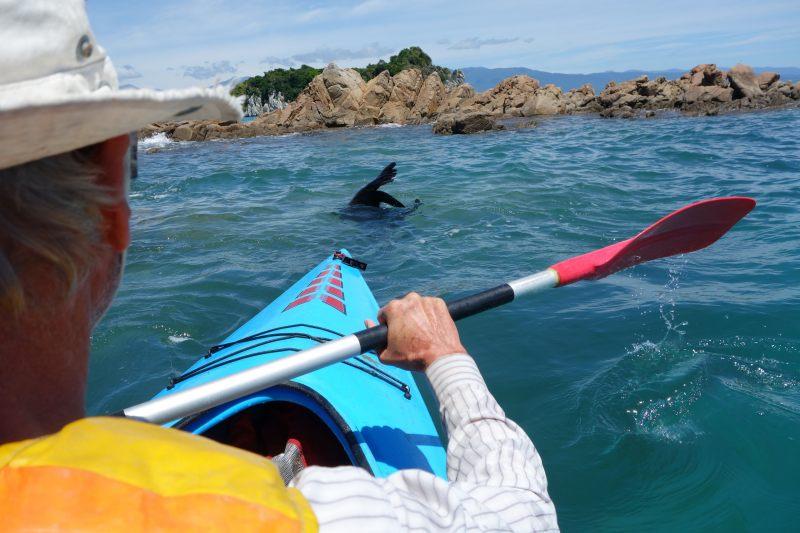 Kayaking with a seall (Takaka 2013)