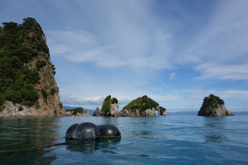 Muscle buoys (Takaka 2013)