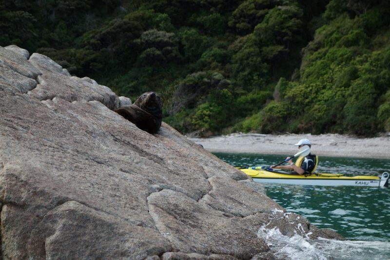Sleep seal (Takaka 2013)