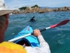 Kayaking with a seall (Takaka 2013)