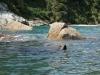 Swimming seal (Takaka 2013)