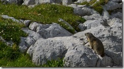Marmot time (Summer Holidays 2015)