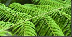 Ferns (Seakayaking Abel Tasman NP)