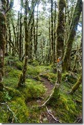 Green bush (Klondyke Valley Tracks)