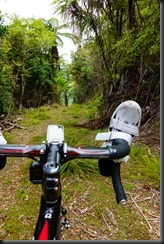 More off road (Cycling Marlborough Sounds)