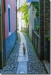 A cat on Isola Superiore (Lago Maggiore)