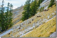 Wildlife (Climbing Tannheimer Tal 2019)