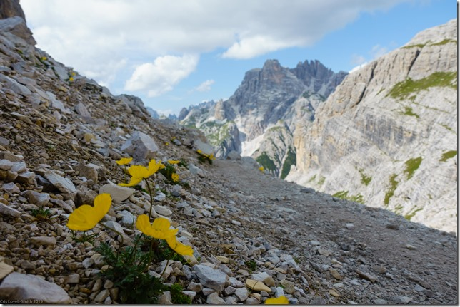 Yellow flowers on route (Dolomitten ohne Grenzen 2019)