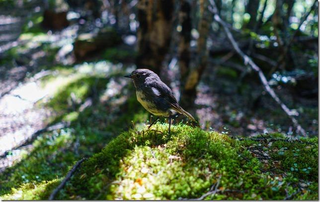 A little robin (Ari visits 2020)