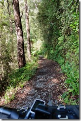 More track (MTB Heaphy Oct 2020)