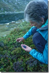 Mum collecting blueberries (Walks in Ticino Sept 2018)