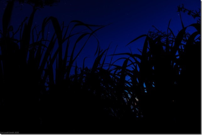 Night time (Ari visits 2020)