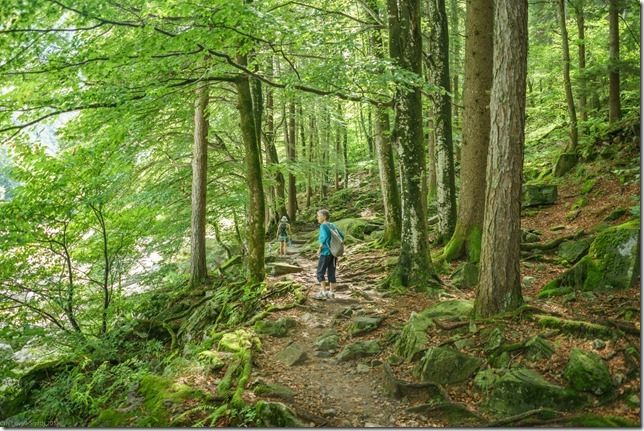 Walking through the forest (Walks in Ticino Sept 2018)