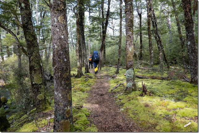 Greenery on the way out (Tramping Hawdon Hut Sept 2021)