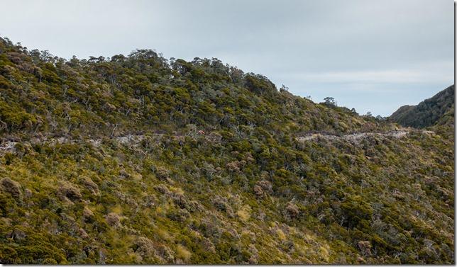 Julian and Caspar rolling along the tops (Mountain biking Paparoa Track Oct 2021)